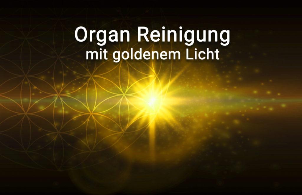 Organ Reinigung mit goldenem Licht